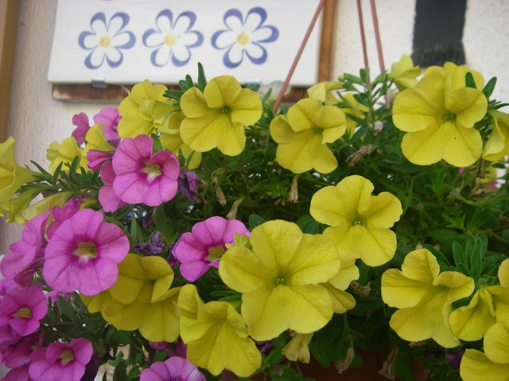 """agriturismo """"3 fiori"""""""
